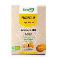 Herbalgem Propolis Large Spectre Gomme Bio B/24 à AIX-EN-PROVENCE